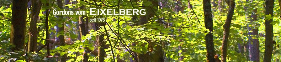Gordon Setter vom Eixelberg